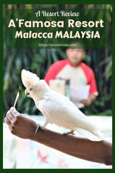 AFamosa Melaka Resort Experience Even if you have time to stay for just a day and night lots can be enjoyed by choosing attractions you enjoy the most. Travel Tips, Travel Destinations, Travel Advice, Travel Ideas, Malacca Malaysia, Bali, Malaysia Travel, Travel Reviews, China Travel