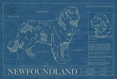 131 best dog blueprints images on pinterest best dogs dog breeds animal blueprint company newfoundland dog print newfoundland puppiesdog printsdog malvernweather Image collections