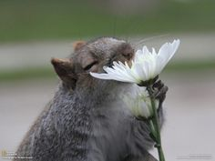 Squirrel and flower. Photo by National Geographic.