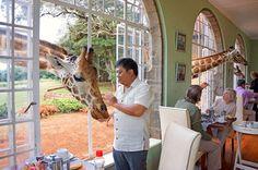 hoteis 4-Giraffe Manor, hotel com girafas no Quênia