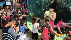 Weeki Wachee Mermaids at the South Carolina Aquarium