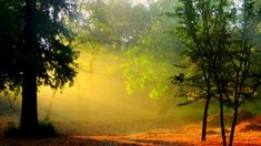 Sun shines bright in the forest HD Wallpaper
