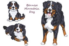 Bernese mountain dog SET by kavalenkava on @creativemarket