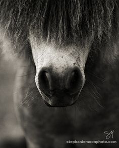 ˚Pony Nose & Whiskers
