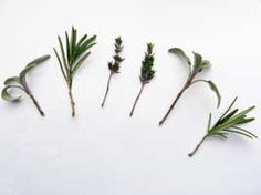 A selection of herb cuttings from the article How to Successfully Take Cuttings of Herbs by growveg.com.