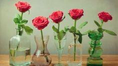 12 Unbelievable Ways to Use Vinegar in Your Garden
