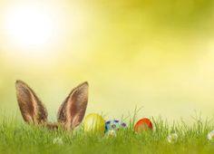 Der Frühling kommt! Wynecenter