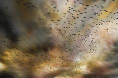 flock, birds