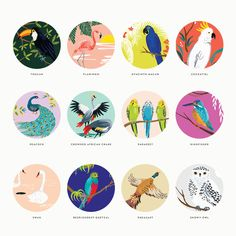 2016 Birds of Paradise Wall Calendar | Brit + Co. Shop - Creative products from makers you'll love.