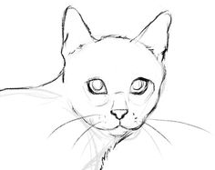 More defined sketch of a cat drawing techniques How to draw a cat Animal Sketches, Animal Drawings, Pencil Drawings, Drawings Of Cats, Drawing Animals, Cat Sketch, Drawing Sketches, Drawing Of A Cat, Realistic Cat Drawing