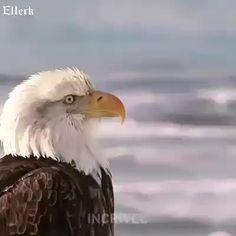 Bela lição da Águia em nossas vidas !!!