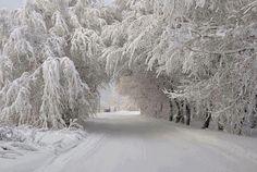 snowy road [via /r/earthporn]
