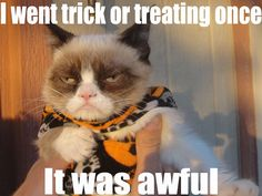 20 Cute and Funny Animal Fall Pictures You'll Love More than PSL #fallmemes #cutememe #cuteanimals #funnyanimals #animalmemes Funny Grumpy Cat Memes, Funny Cats, Funny Animals, Grumpy Cats, Funniest Animals, Funny Memes, Animal Memes, Funny Quotes, Funny Shit