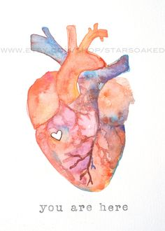 anatomy of love human heart watercolor print diy inspiration - human heart watercolor Heart Artwork, Medical Art, Anatomy Art, Watercolor Print, Watercolor Heart, Art Inspo, Painting & Drawing, Art Drawings, Art Projects