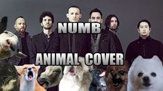 Linkin Park - Numb (Animal Cover) --- I have no words, this is too amazing! ;D *\(^,o,^)/*