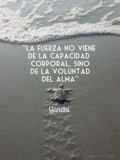 """""""La fuerza no viene de la capacidad corporal, sino de la voluntad del alma"""" - Gandhi #PetsWorldMagazine #RevistaDeMascotas #Panama #Mensajes"""