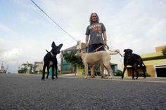 Familia Basset Hound: Animal em condomínio vira caso de Justiça