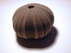 Sea Urchin Shell.....