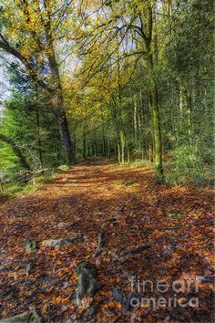 Autumn Forest Walks by Ian Mitchell Country Walk, Country Roads, Snowdonia National Park, Autumn Forest, Walking By, Home Art, Fine Art America, National Parks, Framed Prints