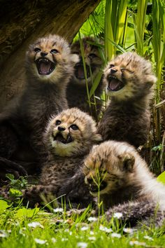 Little Cheetahs by Martin Frehe