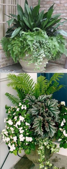 How to create beautiful shade garden pots using easy to grow plants with showy foliage and flowers. And plant lists for all 16 container planting designs! #containergardeningideasflowers