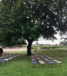 50 Sebel Chairs - The Props Dept. - Adelaide, South Australia - Event Hire