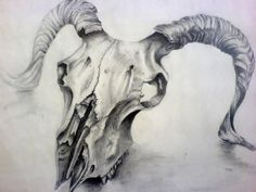 Sheep Skull Drawing by ~Louisa911 on deviantART