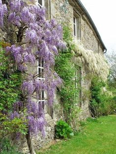 Wisteria - got to love it - the smell - the look...