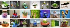ECO LED special gifts & decorations www.kdeco.ro www.facebook.com/kdeco.ro www.wonderfulterrarium.ro Special Gifts, Led, Facebook, Design, Plant, Design Comics