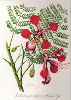 flamboyant flower tattoo - Pesquisa Google