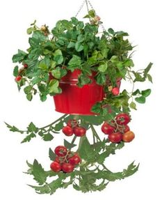 HIT 8399EXR Galvanized Heavy Gauge Steel Hanging Tomato Herb Planter, Red  13.5diax8h 19.99 (