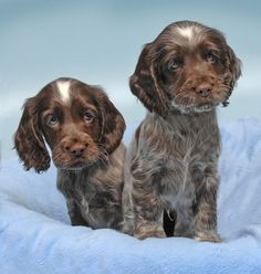 Puppies by Ronald Coulter on 500px
