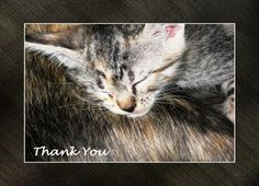 Thank You Kitten Greeting Card