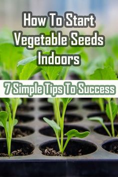 When it comes to advice on how to start vegetable seeds indoors, there are a few simple tips that can go a long way towards ensuring success.