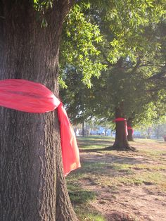 We used full sized red table cloth's from $$ store to tie on our trees on campus