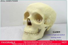 123.00$  Buy now - http://alidjb.shopchina.info/go.php?t=32307340831 - TEACHING PHYSICS PLASTIC SURGERY ORTHOPEDICS SURGICAL DEMONSTRATION MODEL SKULL NEUROLOGY CRANIOPLASTY SKULL MODEL GASEN-FZG009 123.00$ #aliexpress