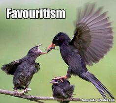 Funny Bird Favouritism Meme Joke Picture | Funny Joke Meme Pictures