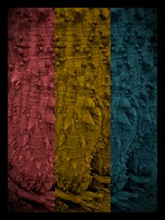 ColoriSpinosi