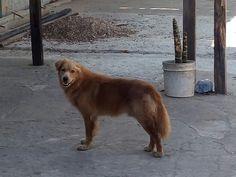 cão, abandonado, porta de casa, família, retorno, Macapá, Amapá (Foto: Gabrielle Nascimento/ Arquivo Pessoal)