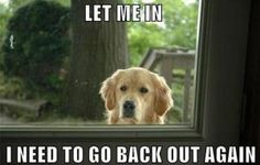 25 Dog Memes That Will Always Make Us Laugh: Let Me In, I Need To Go Back Out