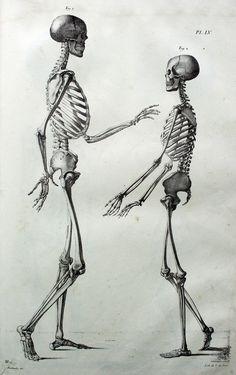 Jules Cloquet (https://pinterest.com/pin/287386019948845673). Anatomie de l'Homme... (1826). PL. LV.