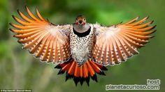 Hermosas aves congeladas en el tiempo | Planeta Curioso