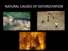 Image result for causes of deforestation