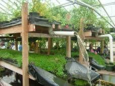 Growing Power Aquaponics Year Round Greenhouse