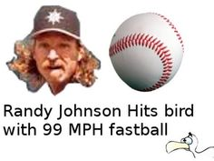 """On March 24, 2001, Randy Johnson pitched a fastball that hit a bird.  The ball was dead.  The bird was dead.  The fowl pitch was declared a """"no pitch"""" by the umpire, as was his prerogative.  . . . http://bleacherreport.com/articles/2004585-on-this-day-in-2001-randy-johnson-hit-a-bird-with-a-pitch-during-a-game"""