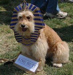 25 Creative Dog Costumes