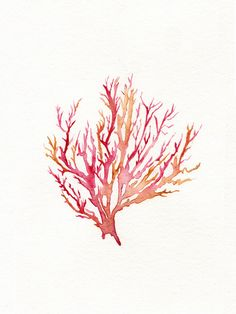No 3 Sea Coral  / Red / Pink / Yellow Ochre / by kellybermudez, $20.00