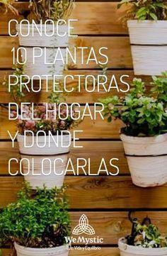 Albahaca, Canela, Cactus, Hierbabuena,  Helecho, Lucky Bamboo, Laurel