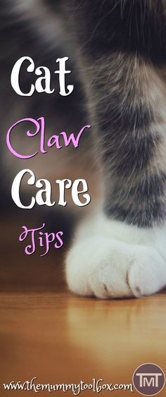Who doesn't love a mani-pedi?? Make sure that you take care of your cat's claws with these claw care tips to avoid health complications in the future. #cathealthcare #cathealthtips