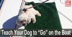 Want to take your dog aboard your boat?  Don't want to have to go ashore several times a day?  Train it to use a piece of carpet on deck. via @TheBoatGalley